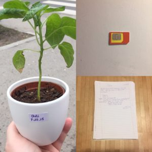 Kristina Kral #157 Pflanze Simkarte gescannte Notenblätter