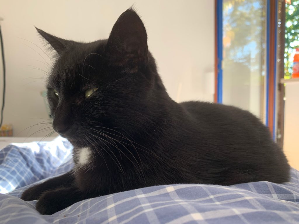 Das Bild zeigt eine schwarze Katze
