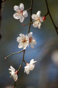 Symbolbild: Blumen | Das Magnifikat