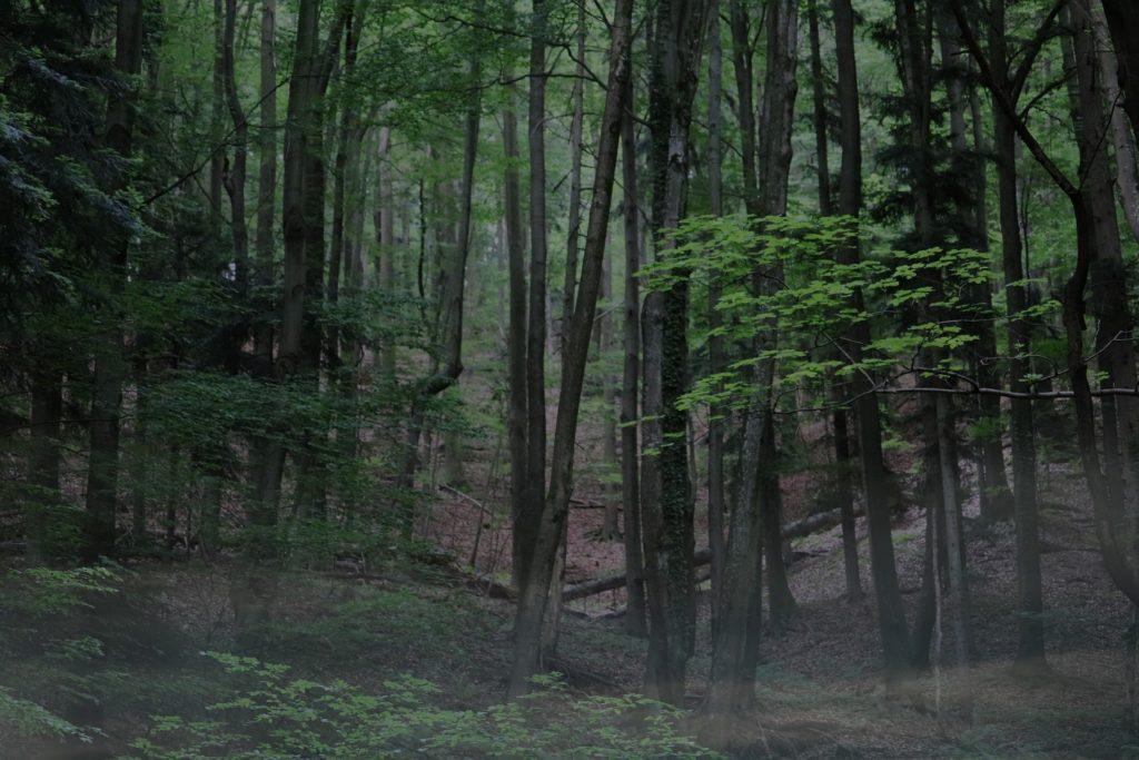 Bild: Wald, Naturverbundenheit (c) Fleimax