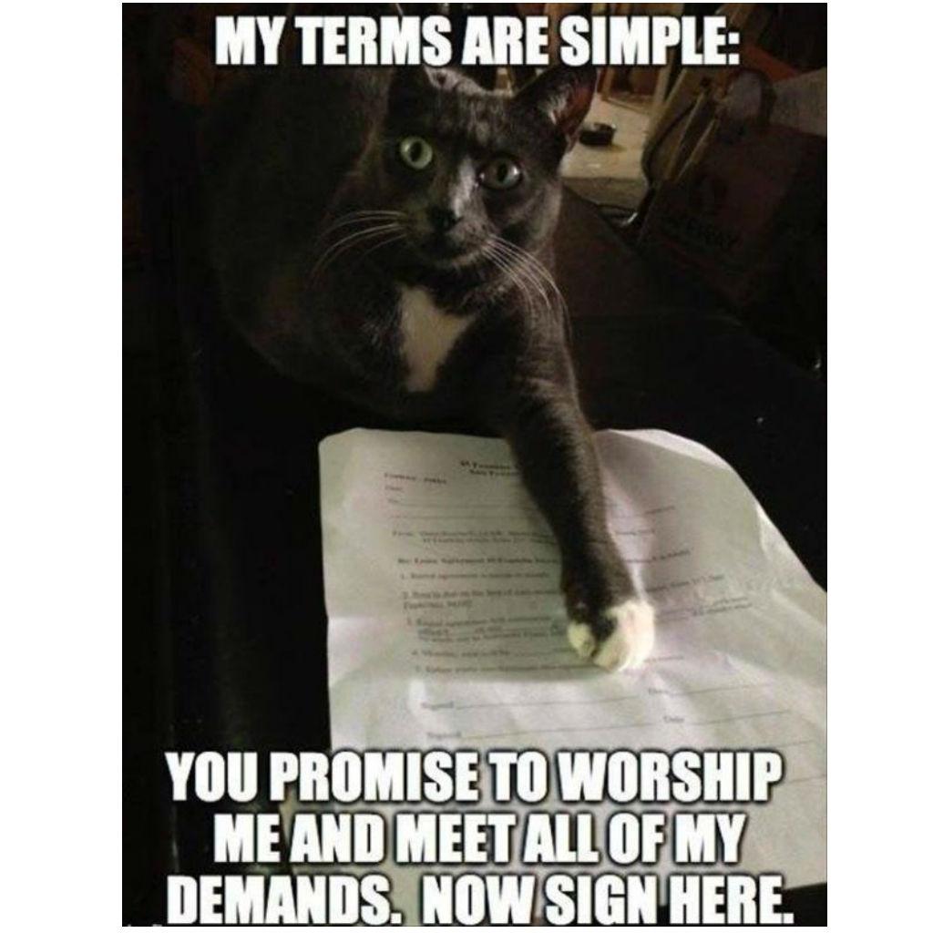 Katzen und Vertragsrecht | Katzen Meme