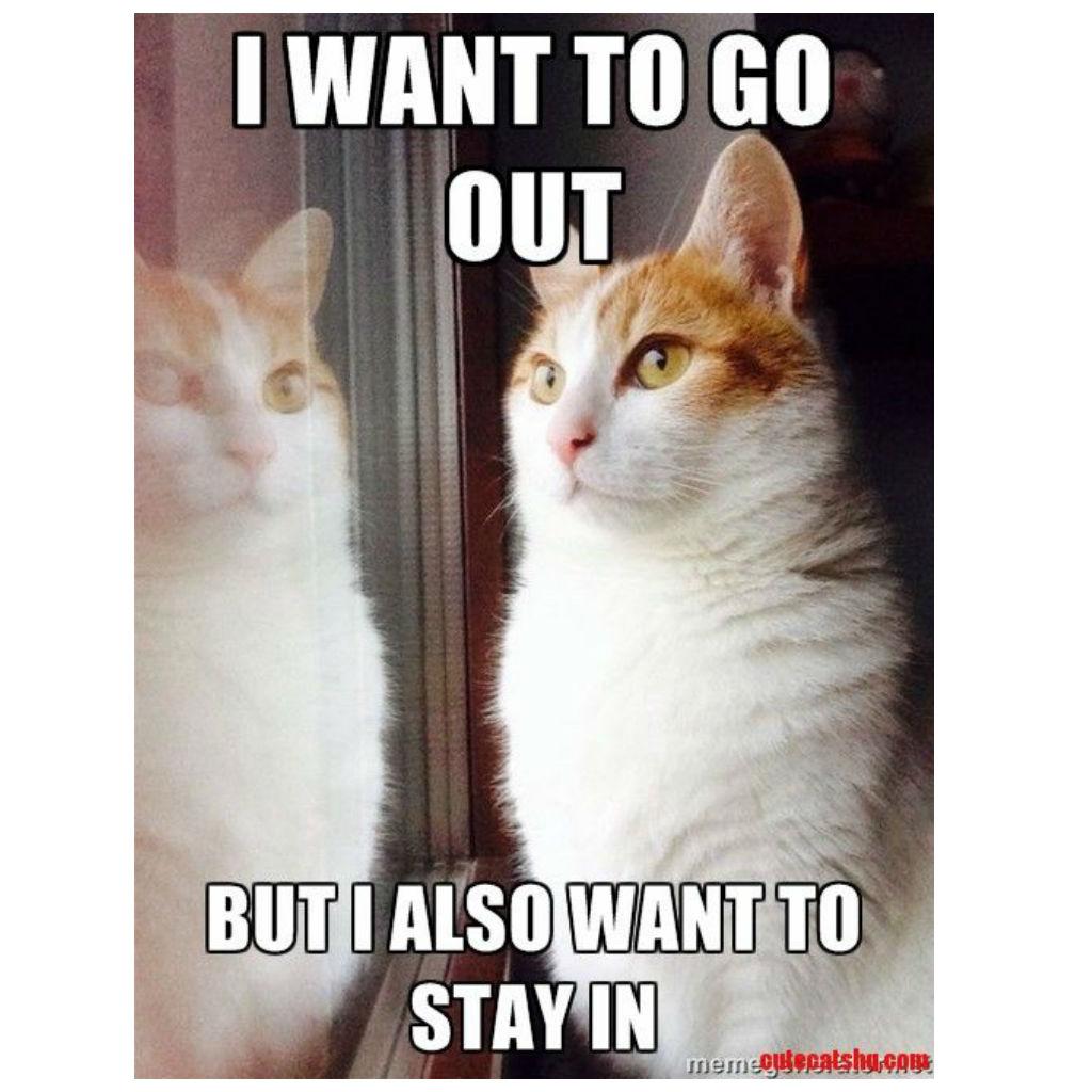 Unentschiedenheit in Katzen | Katzen Meme