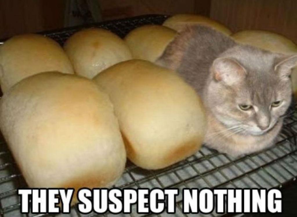 Random Katzen Meme | Cat Meme