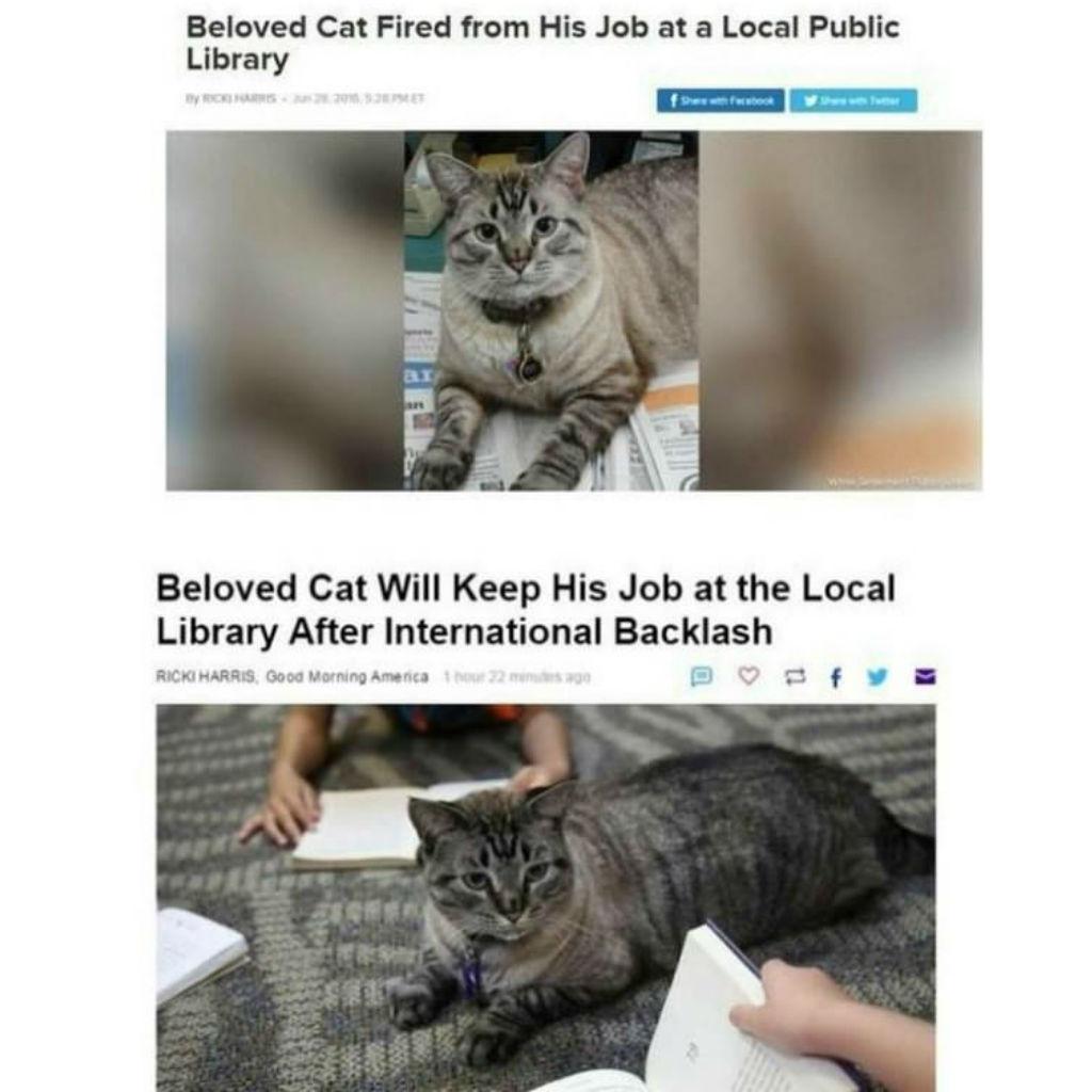 Berufstätige Katzen | Katzen Meme